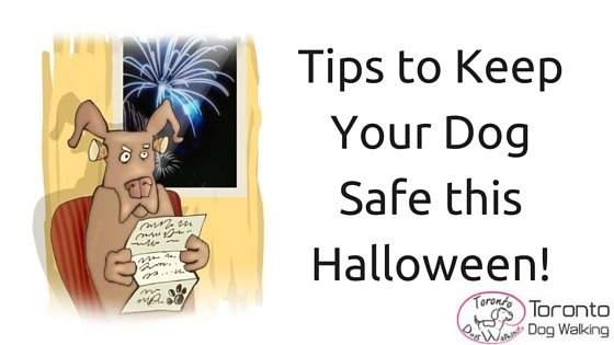 How to keep your pup safe this Halloween!