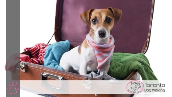 Pet Sitting Versus Dog Boarding At Kennels: Which Is Best?
