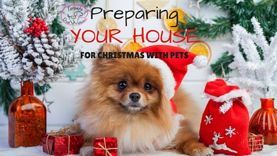 Preparing your house for Christmas with Pets!