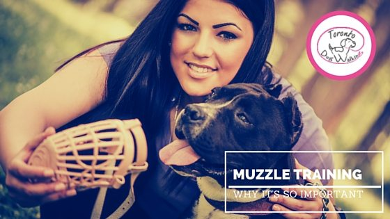 Why Muzzle-Training Your Dog is a Necessity