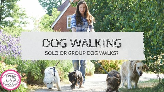 Dog Walking: Should my Dog walk Solo or in a Group?