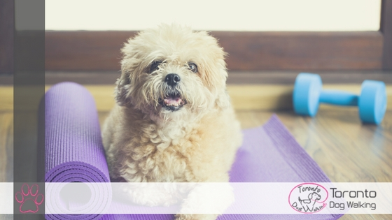 Exercise with your Dog – 5 Ways to Get Fit With Your Dog!