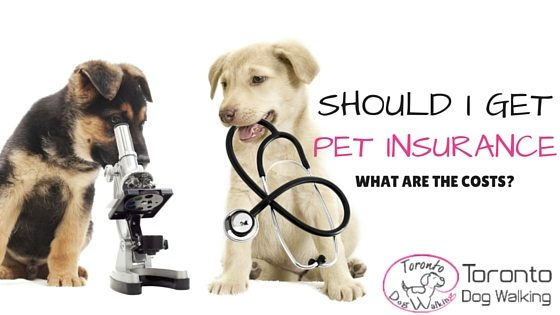 Pet Insurance! Is it worth it to get my dog insured?