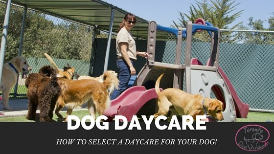Looking for a Dog Daycare? What to look for!