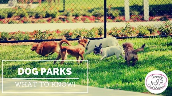 Dog Safety at The Dog Park – Warning Signs When You Should Leave!