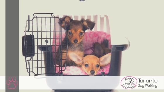 How to Crate Train Your Dog!