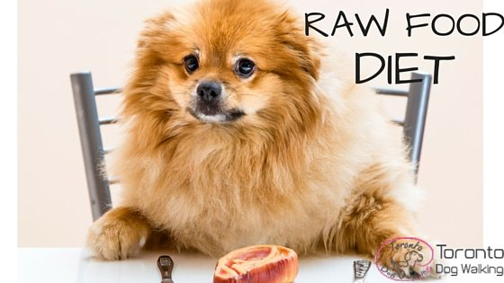 Raw Cat Food Toronto