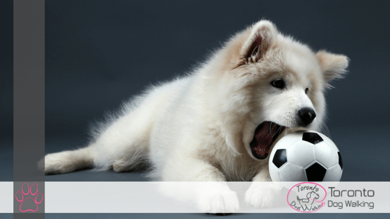 Dog Enrichment Games – Keep Your Pup Entertained!