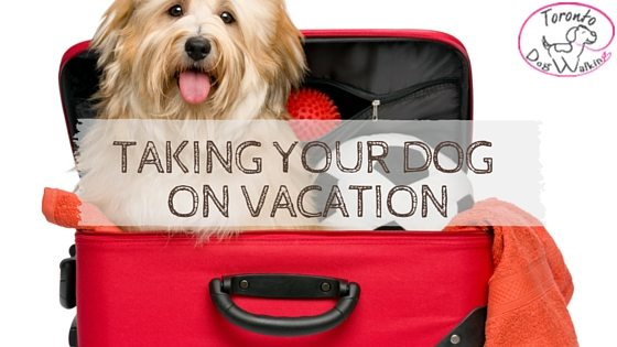 Thinking About Taking Your Dog On Vacation? Here Are Some Tips!