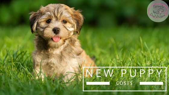 Thinking of Getting a Puppy? Here are some of the costs involved!