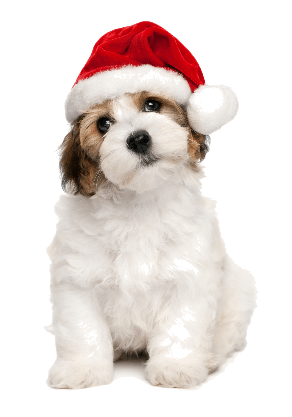 christmas dog | Toronto Dog Walking