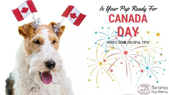 Get Your Dog Ready for Canada Day Fireworks & Festivities!