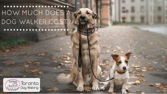 How Much does a Toronto Dog Walker Cost? Toronto Dog Walking Rates
