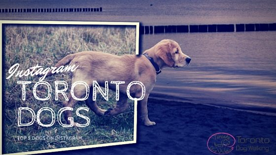 Top 5 Toronto Dogs You Need to Follow on Instagram!