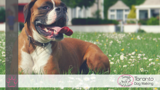 Signs Your Dog is Overheating – What to Watch Out For!