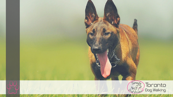 How to Reduce your Dogs Temperature Naturally