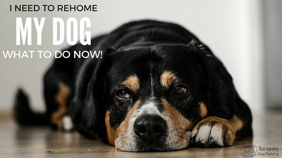 You Need to Rehome Your Dog:  What to Do