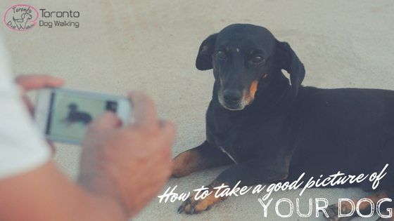 How to Take a Good Picture of Your Dog!