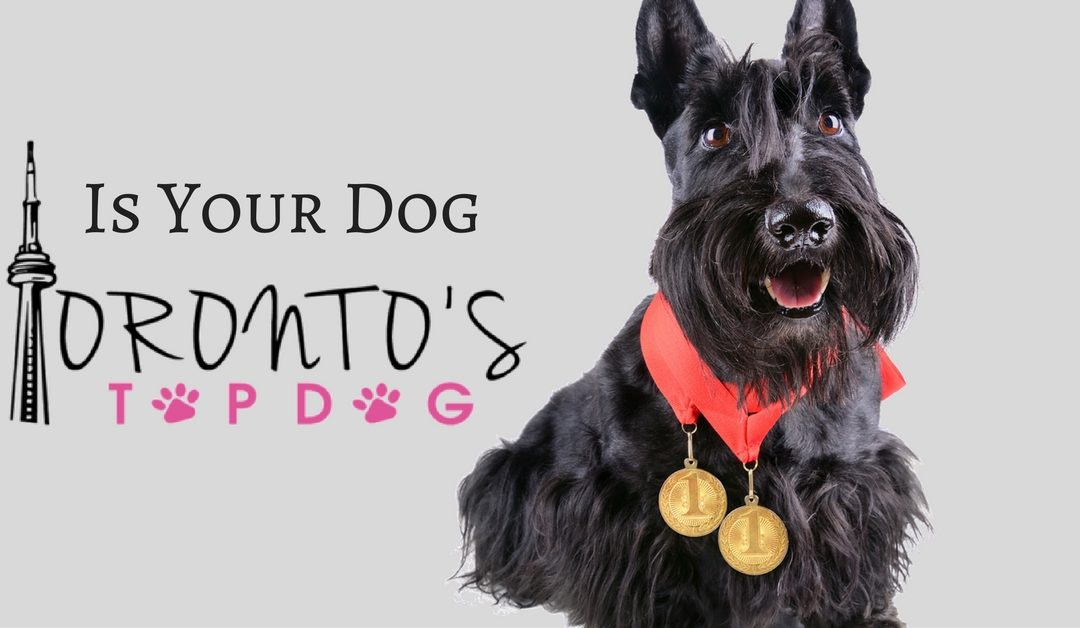 Press Release: Toronto Dog Walking launches contest to find Toronto's Top Dog!