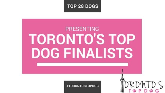 Toronto's Top Dogs – The Finalists