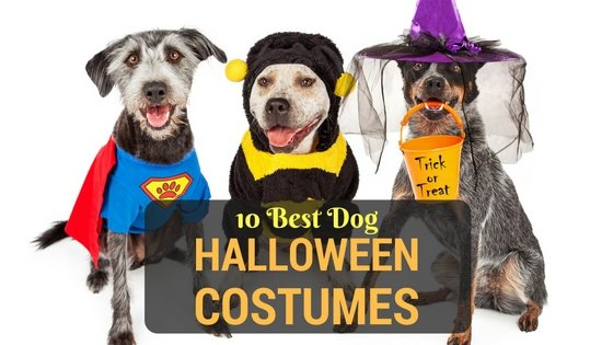 10 best halloween costumes for large dogs