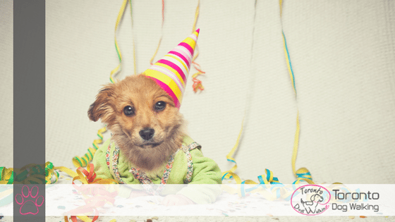 Homemade Party Treats for Your Dog!