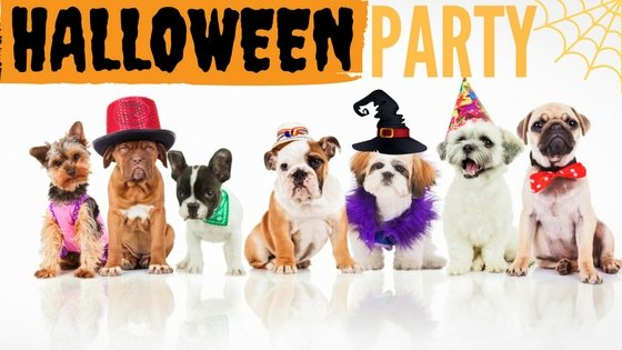 Throwing a Halloween Party for Your Dog!