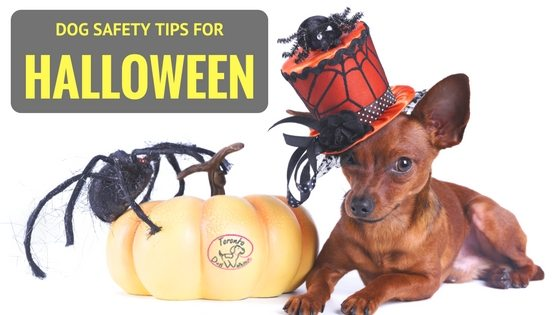Tips for Keeping your Pet Safe on Halloween