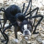 Another great idea for a spotted dog is to draw eight legs onto each of your dogu0027s spots to make it look as though spiders are crawling all over your pet. & torontodogwalking Author at Toronto Dog Walking | Page 16 of 30