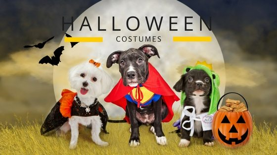 Top 10 Halloween Costume Ideas for Your Small Dog