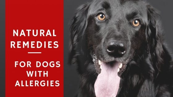 Natural Remedies for Dogs with Allergies
