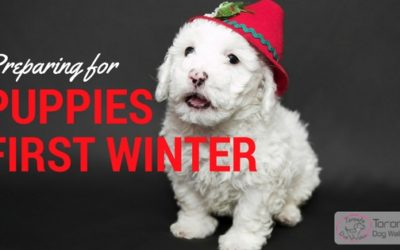 Preparing for Puppies First Winter