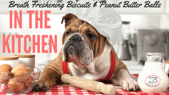 Does Your Dog Have Stinky Breath? Make Breath Freshening Biscuits!