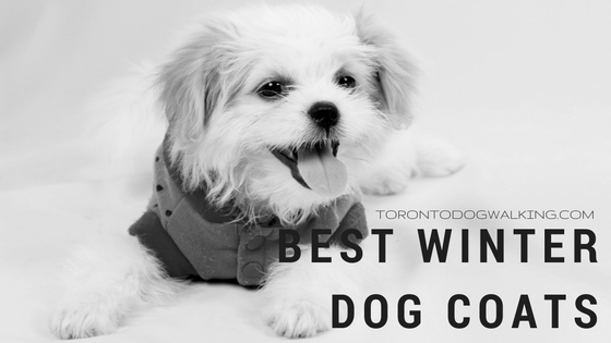 Best Winter Coat For Your Dog