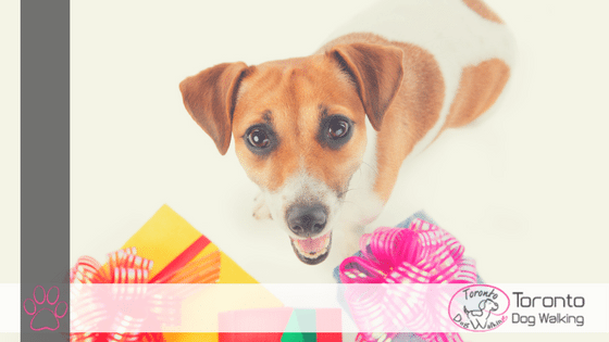 Celebrate Your Dog | Ultimate Gift Guide for Dogs