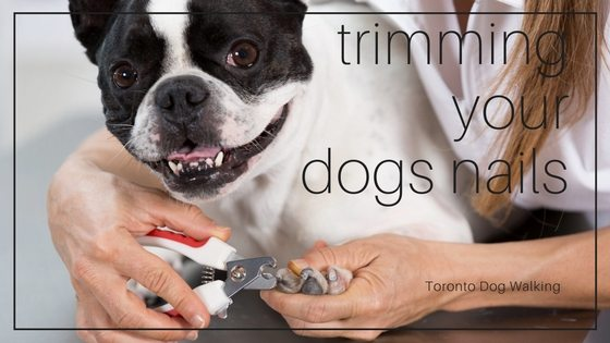 Trimming Your Dogs Nails | Do it Yourself or Seek Help?