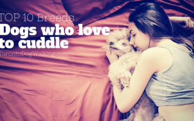 Most Lovable Dog Breeds who Love to Cuddle
