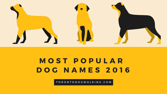 Most Popular Dog Names in 2016