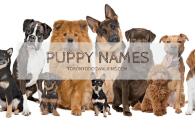 Does your New Puppy Need a Name?