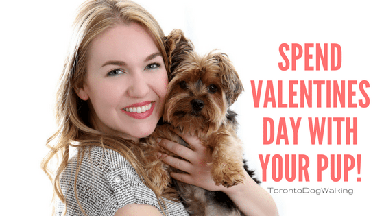 How To Spend Valentines Day With Your Pup