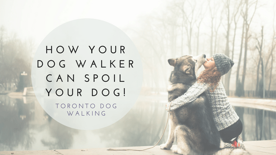 How Your Dog Walker Can Spoil Your Pup!