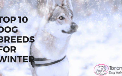 Best Dog Breeds for Winter or Cold Countries