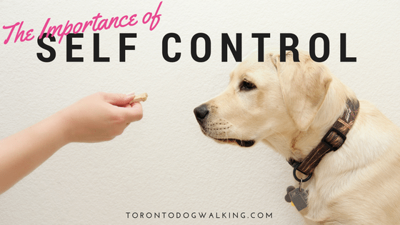 The Importance of Teaching your Puppy Impulse Control