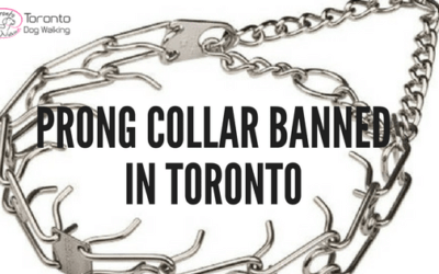 The City of Toronto Bans the Use of Prong/Pinch Collars and Choke Chains on Dogs