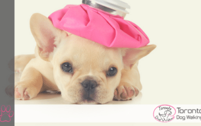 Overcoming Upset Tummies in Dogs | Causes & Remedies