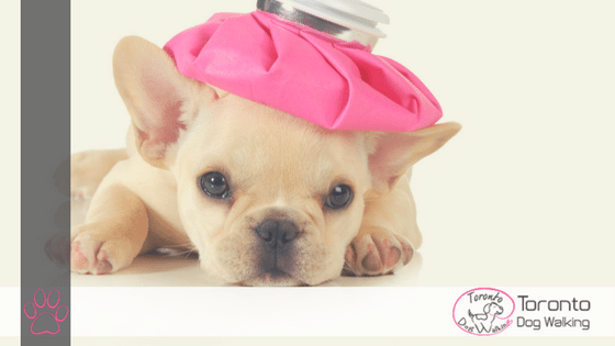 Overcoming Upset Tummies in Dogs   Causes & Remedies