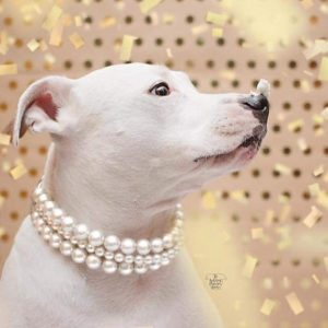 dog pearl collar