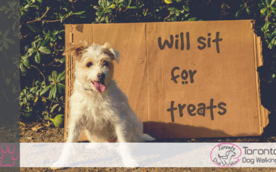 Top 5 All Natural Dog Treats