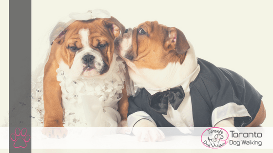 Ways to Dress up your Dog for a Wedding