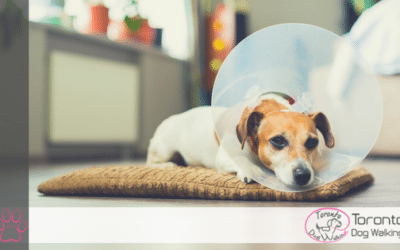 What to Expect When Your Dog Gets Fixed/Neutered